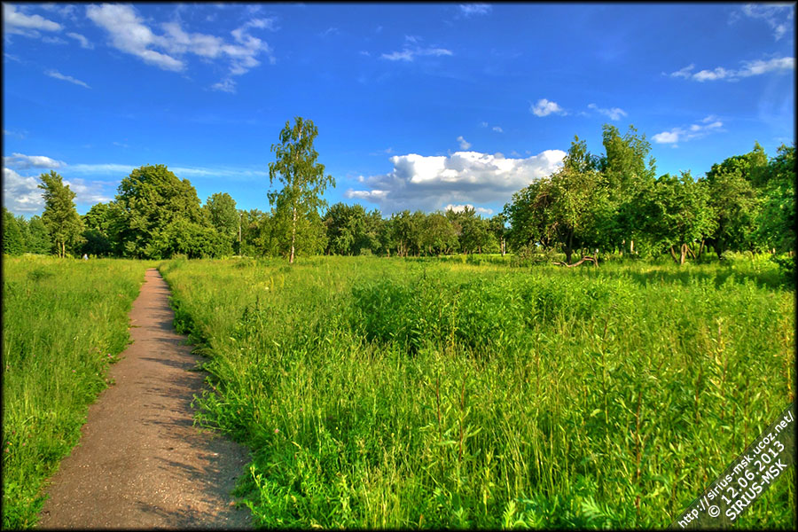 Нижний Царицынский пруд, 12.06.2013