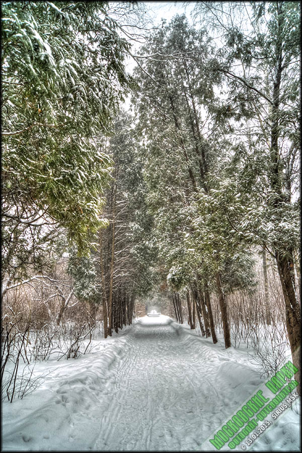Бирюлёвский дендропарк, 13.01.2015