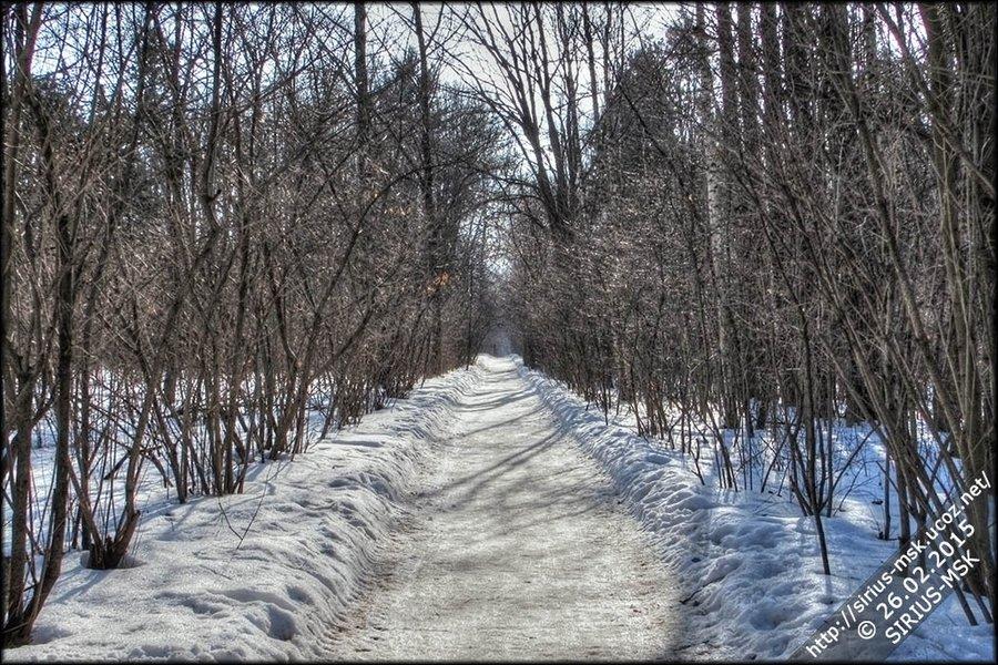 Бирюлёвский дендропарк, 26.02.2015